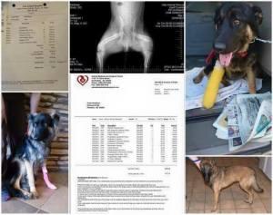 help saving paws rescue
